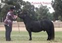 Fenwick Trident